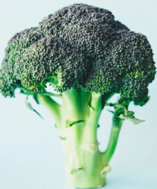 Is Plant Based Protein Powder Good For You - head of broccoli
