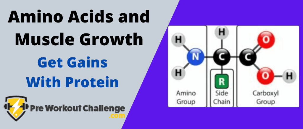 Amino Acids and Muscle Growth