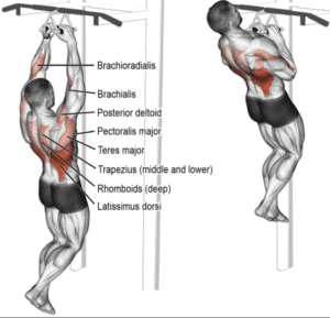 Pull Up Bars For The Home - pull up muscles used